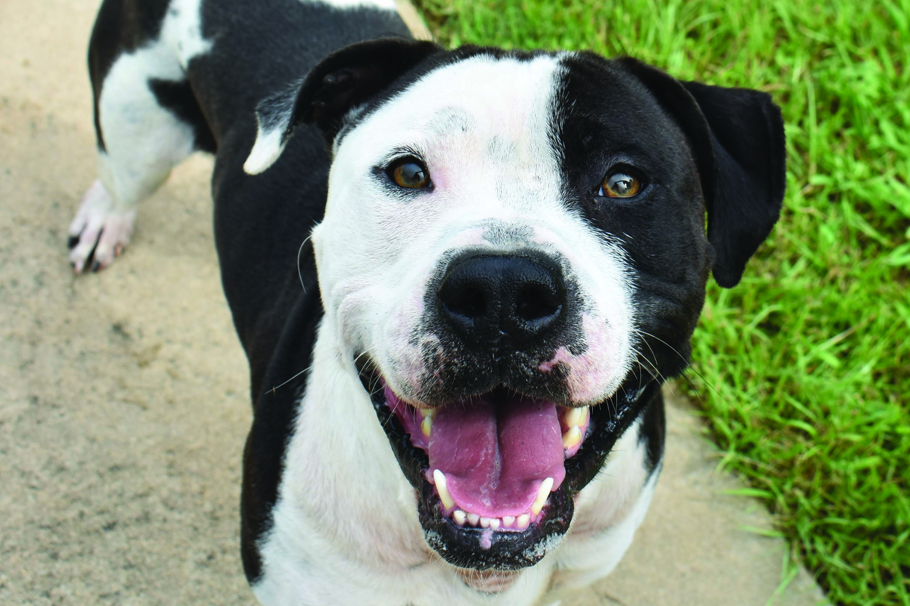 City of LaGrange Animal Services Receives $10,000 Grant to Help Save More Animals